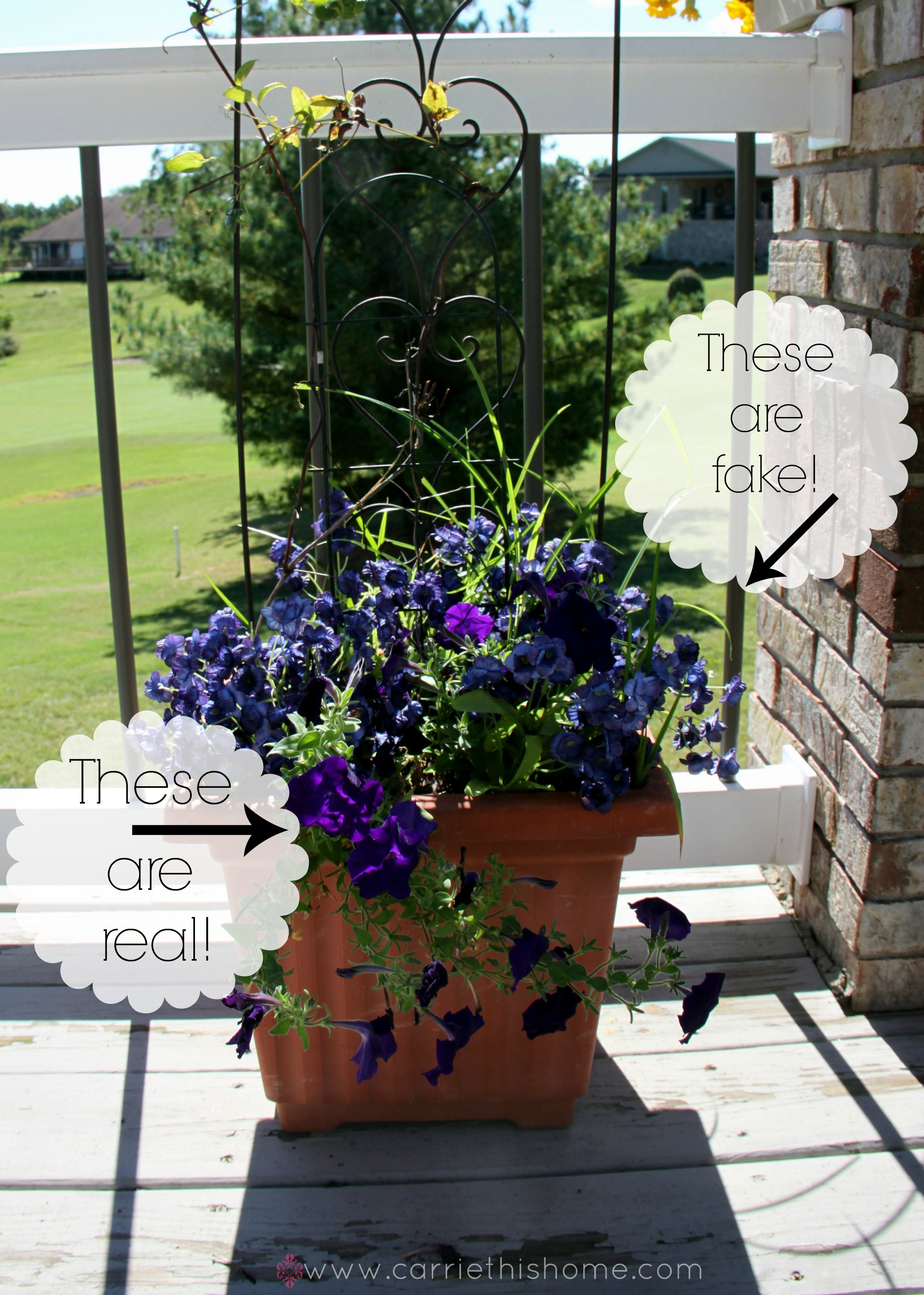 Tips For Beautiful Flowers