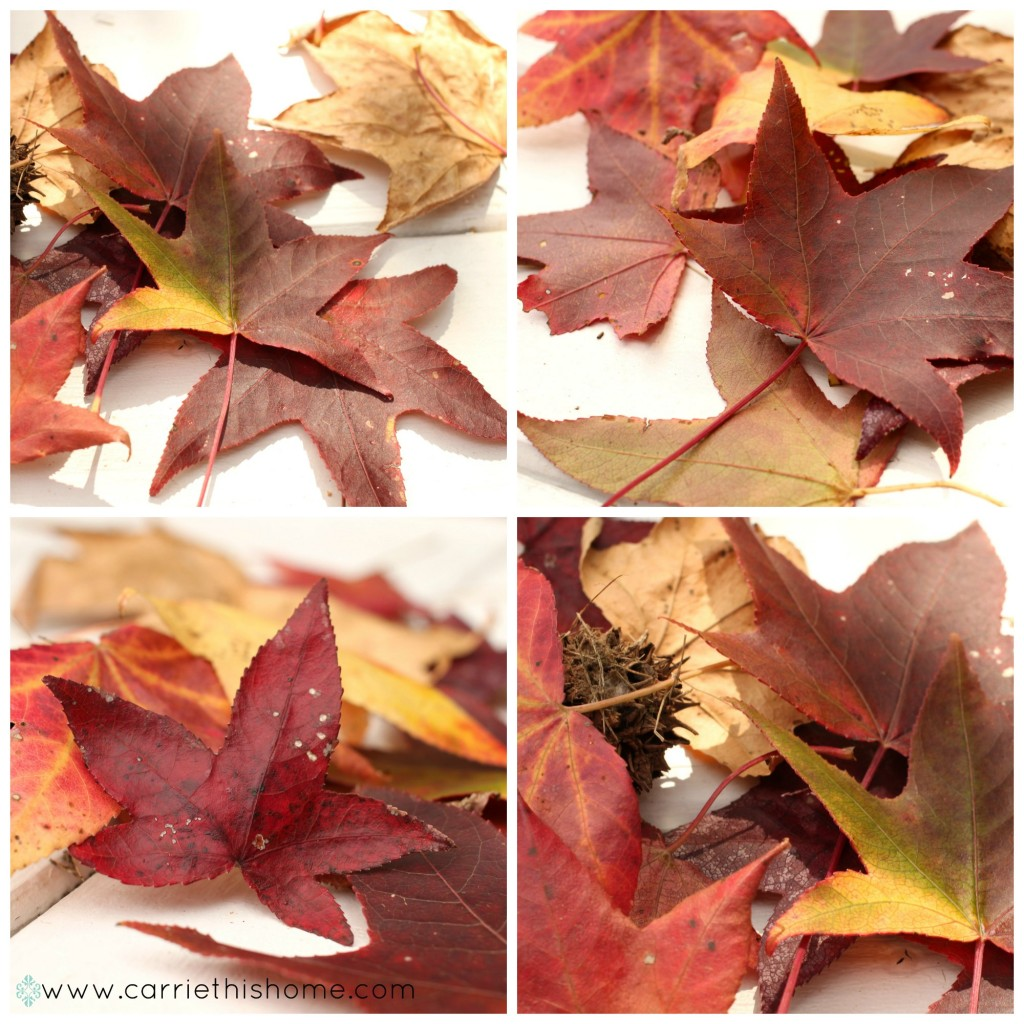 Take pictures of beautiful fall leaves to use for your fall decor